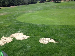 gopher control at sherwood country club