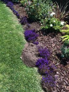 Gopher Mound In Garden